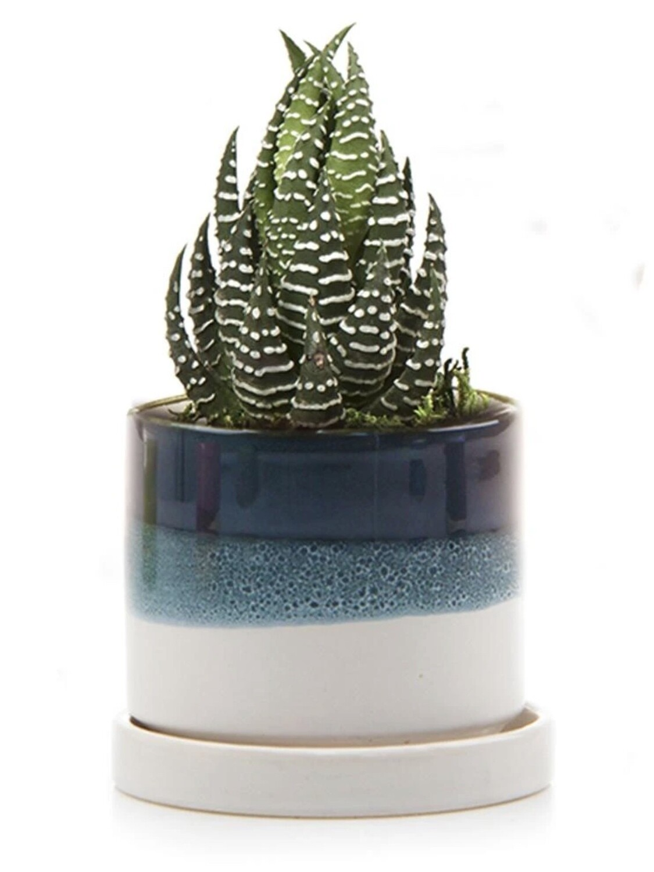 Chive Green Blue Minute Ceramic Pot- MIPSGB