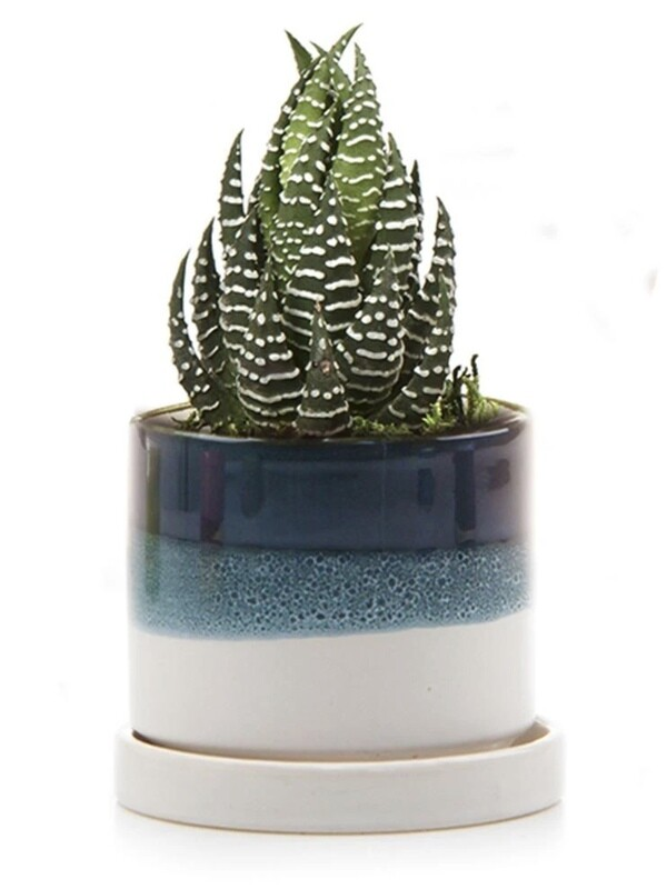 Chive Green Blue Minute Ceramic Pot- MIPSGB