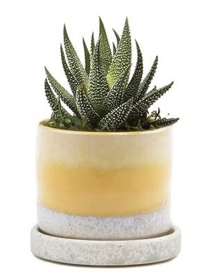 Chive Boomtastic Minute Ceramic Pot- MIPSBO