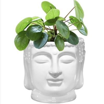 White Ceramic Buddha Bust Planter - WBPL4