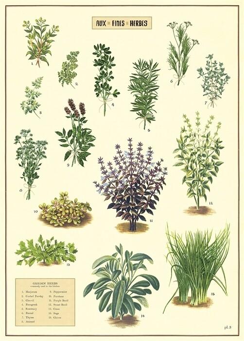Kitchen Herbs Poster #117