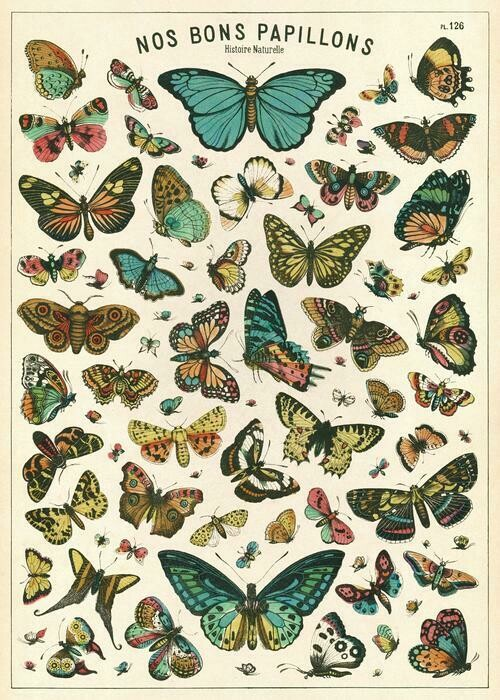 Butterfly Chart Poster #314