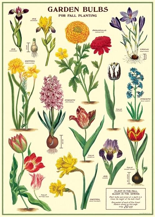 Garden Bulbs Poster #104