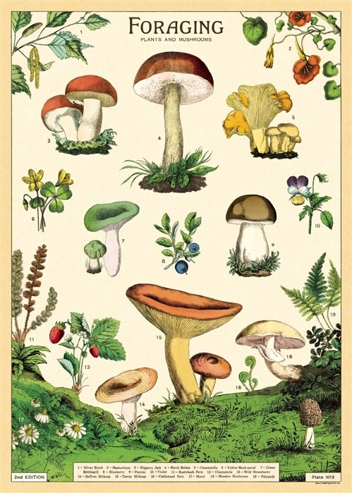 Forage Poster #305