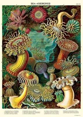 Sea Anemones Poster #212