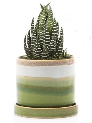 Chive Green Layers Minute Ceramic Pot- MIPSGL