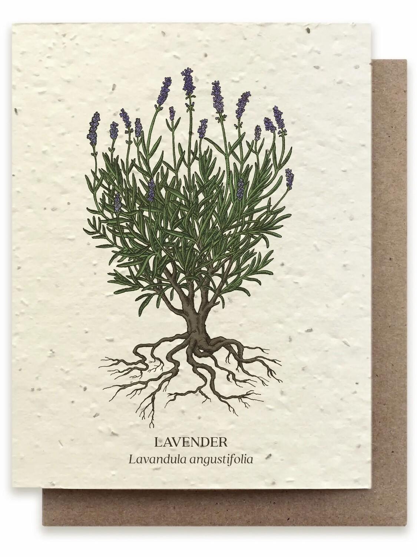 Lavender Botanical Greeting Card - Plantable Wildflower Seed Card - BC107