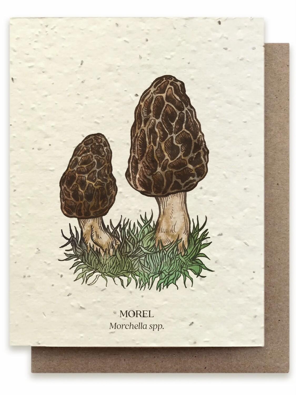 Morel Wild Mushroom Greeting Card - Plantable Wildflower Seed Card - BC108