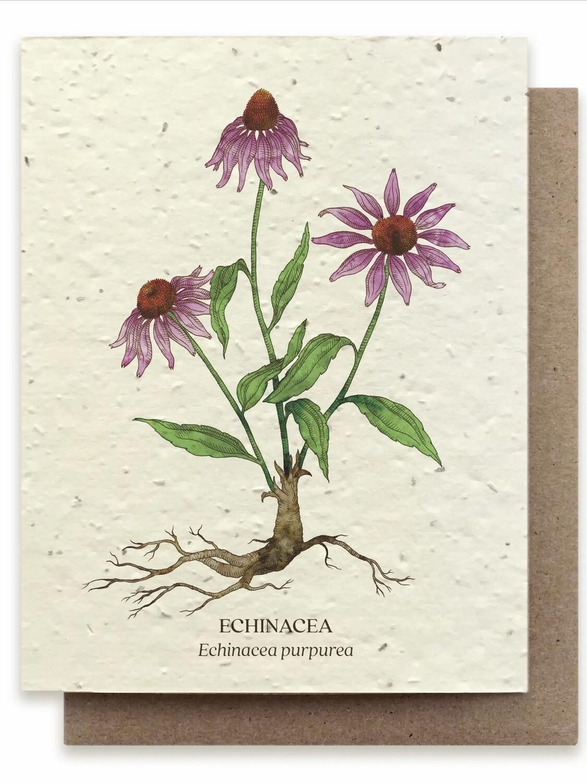 Echinacea Botanical Greeting Card - Plantable Wildflower Seed Card - BC102