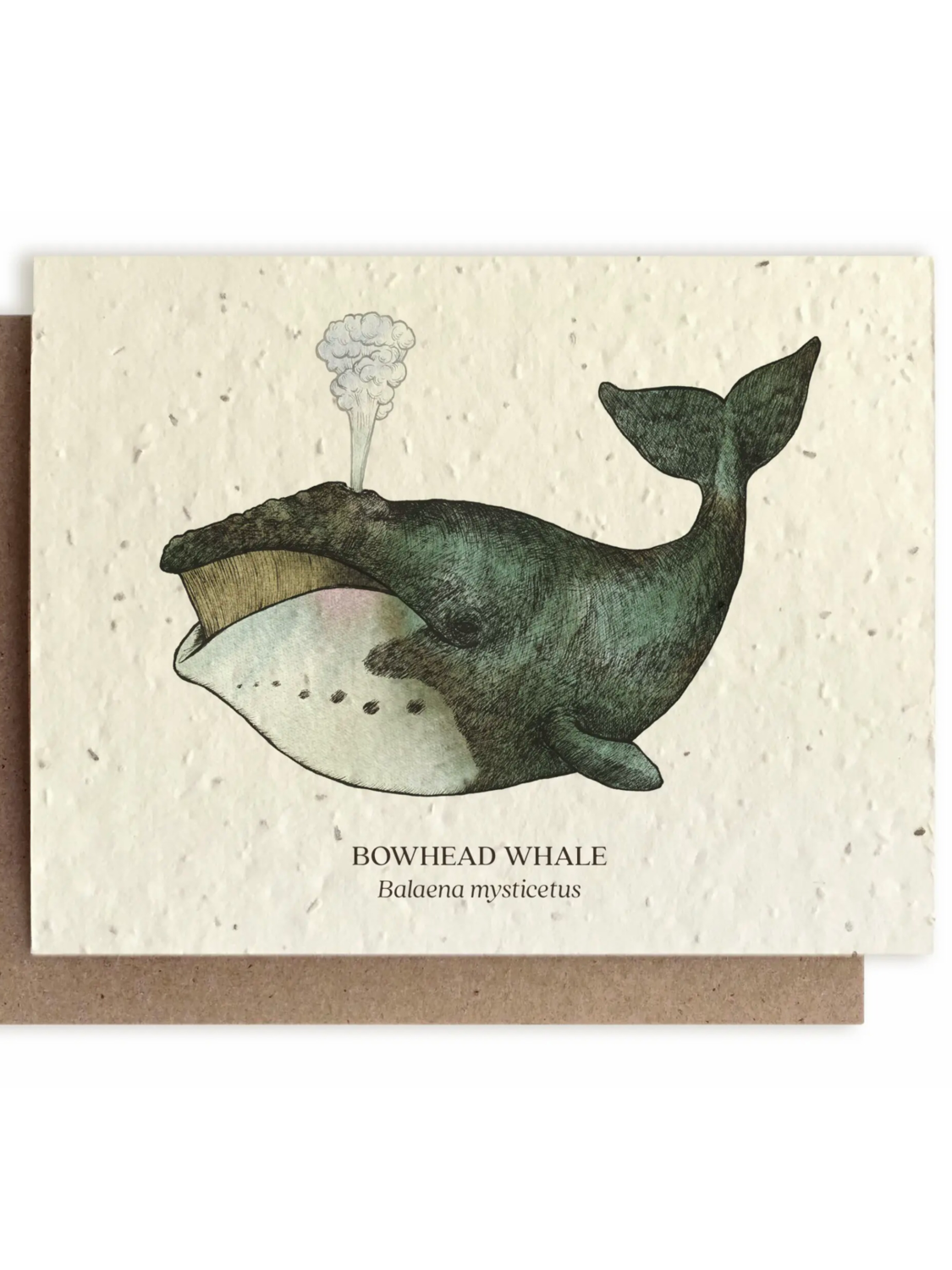 Whale Ocean Greeting Card - Plantable Wildflower Seed Card - BC110