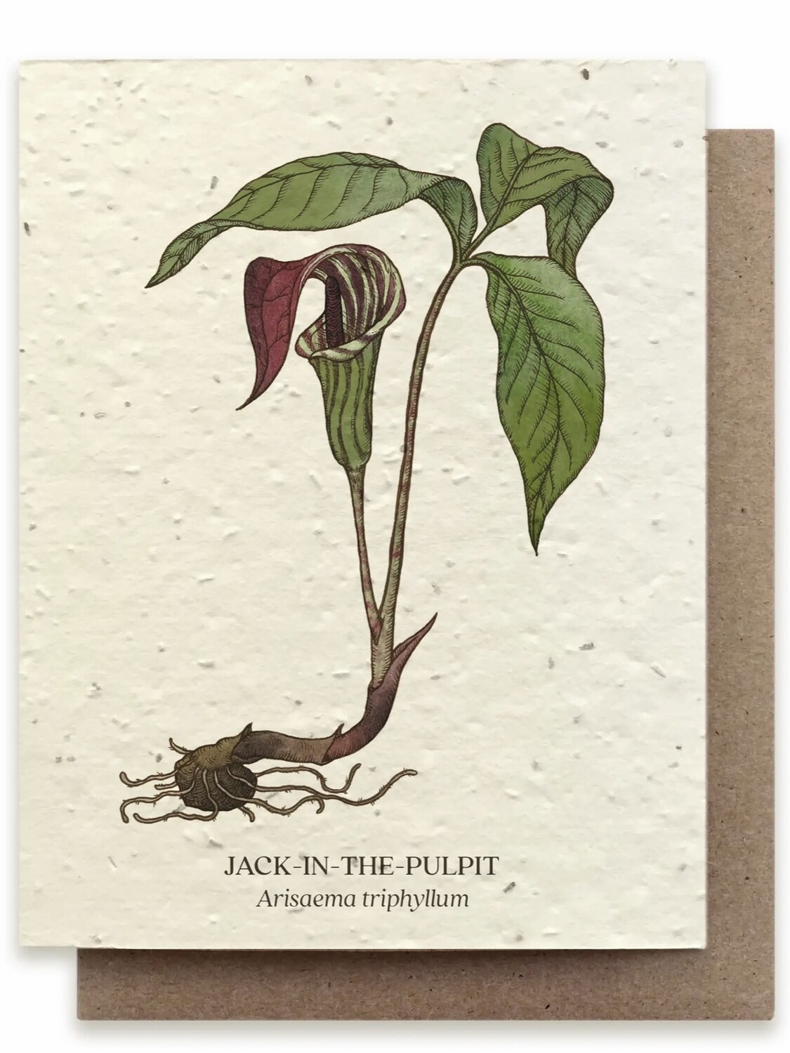 Jack-in-the-Pulpit Greeting Card - Plantable Wildflower Seed Card - BC112