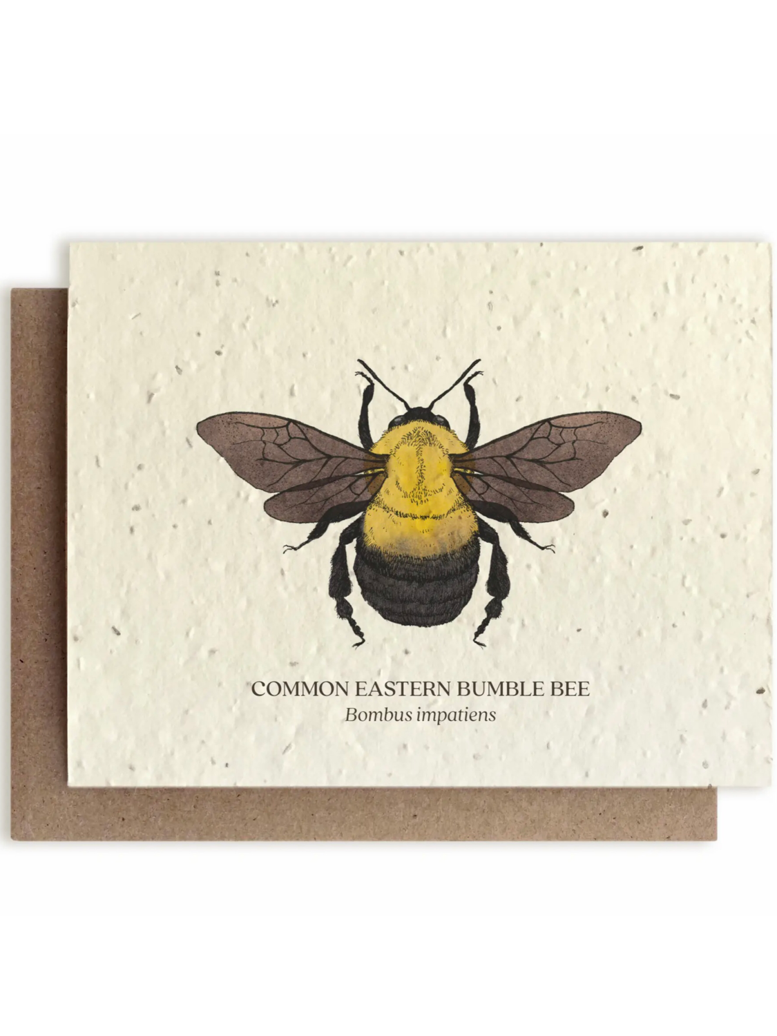 Bumble Bee Greeting Card - Plantable Wildflower Seed Card - BC115