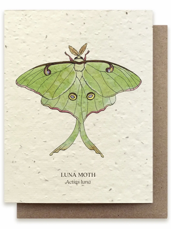 Luna Moth Greeting Card - BC120