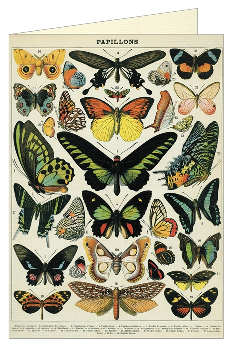 Vintage Butterflies Greeting Card - CV3