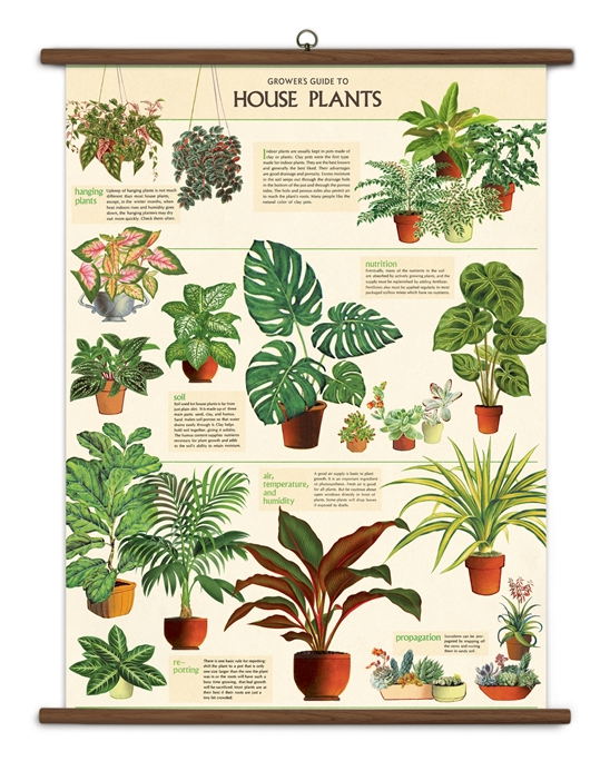 House Plants Vintage School Chart