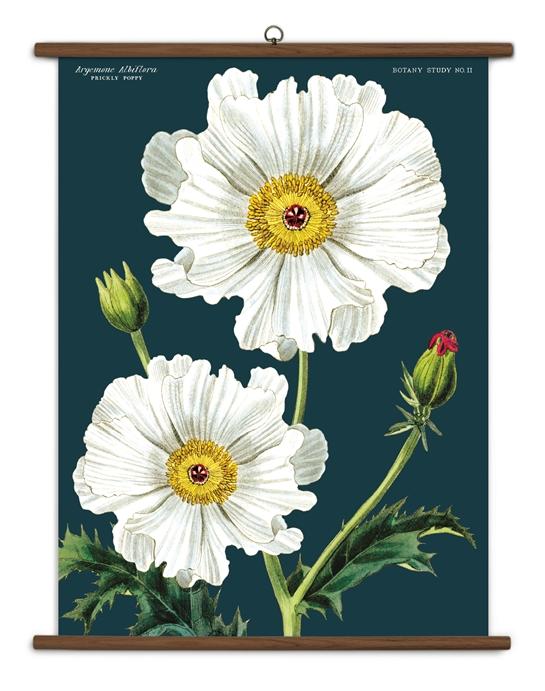 White Poppy Botany Large School Chart