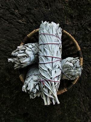 Baby White Sage Bundles (red thread)