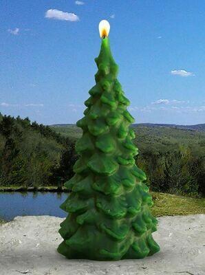 Beeswax Evergreen Tree - Sunbeam