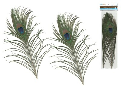 Real Peacock Feathers 2pk