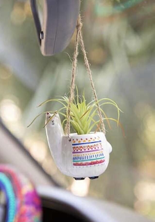Llama Succulent