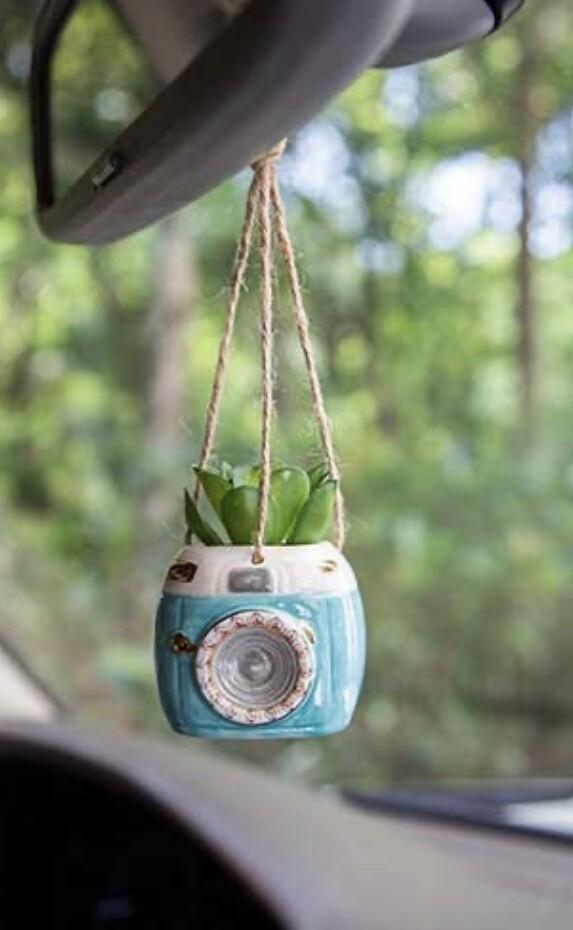 Camera Succulent