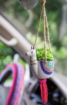Hanging Succulent