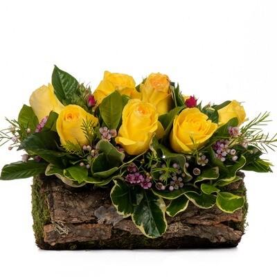 Femi | Arreglo de 10 rosas amarillas en tronco