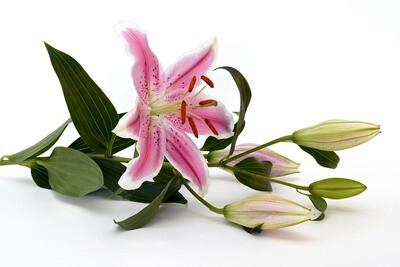 Pity bouquet de liros