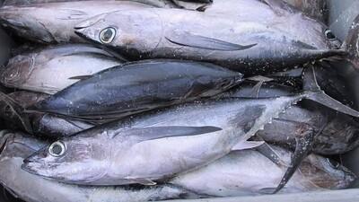 Fish Barilis (1kg)