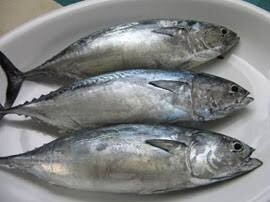 Fish Tulingan (1kg)