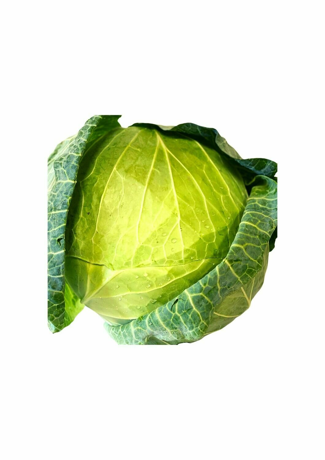 CABBAGE GREEN - WHOLE