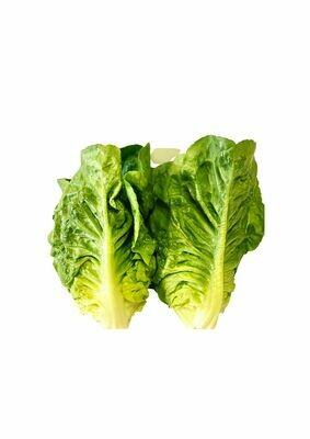 LETTUCE BABY COS (TWIN PACK)