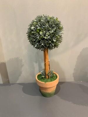 Ball Boxwood Topiary