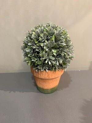 Round Boxwood Topiary