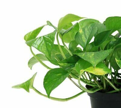 Houseplants 5-6