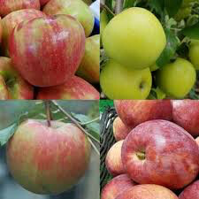 Apple 4 In 1 Cold Climate 7 gal.