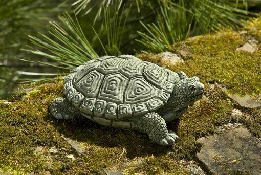 My Pet Turtle - BR