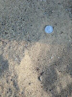 Mason/Play Sand 1 cu.yd.