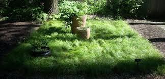 Carex Grass Pensylvanica 1 qt.