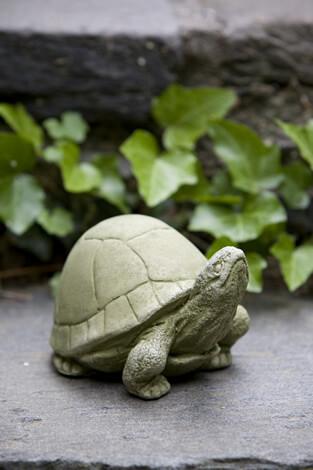 Box Turtle (GS)