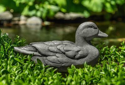 Decoy Duck (PN)
