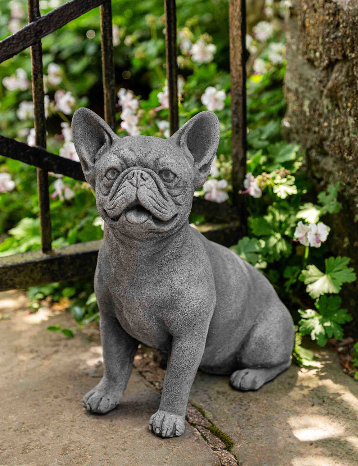 Frenchie - AS