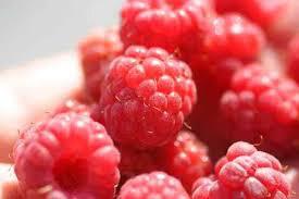 Rubus 'Polana' 2 gal