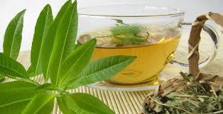 Verbena Lemon Organic 1 Pint