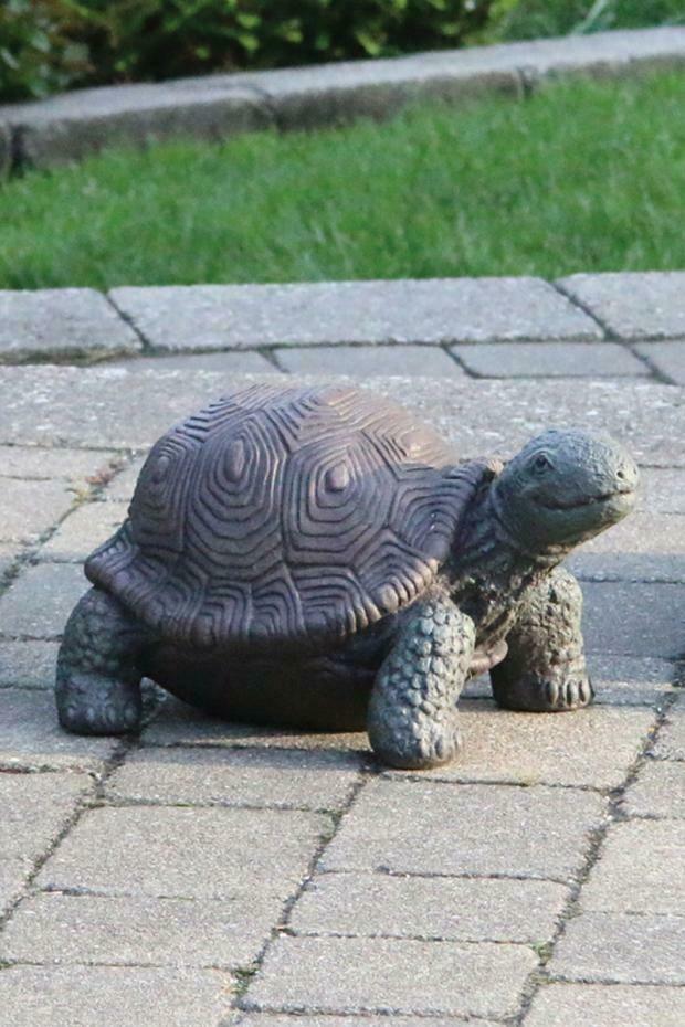 """8"""" Medium Tortoise"""