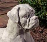 Boxer (GS)
