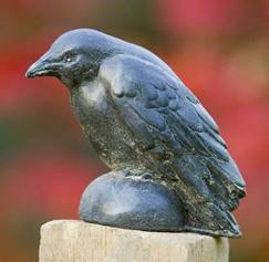 Small Raven (TN)