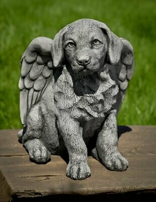 Angel Puppy (AS)