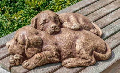 Nap Time Puppies (BR)