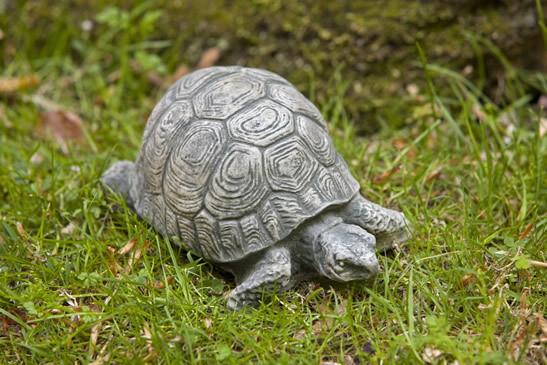 Small Turtle (EM)